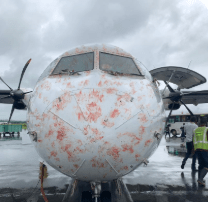 #PrecisionAir #ATR72 suffers bird strikes prior to landing in #Mwanza